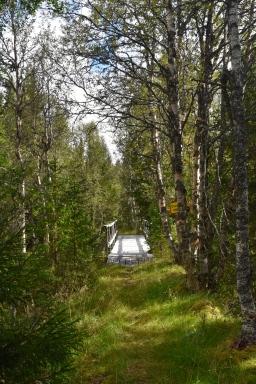 Bro över sällan, de första stegen...